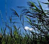 breeze in grasses