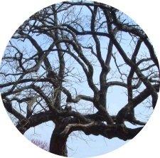 baret tree branches