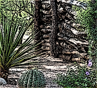 walls and cactus